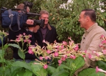 Chris Gurney talking to the TV crew about his tobacco plants